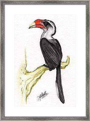 Von Der Decken's Hornbill Framed Print by Justin F C Miller