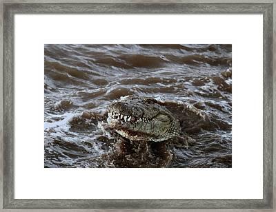 Voracious Crocodile In Water Framed Print