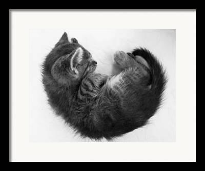 Fetal Framed Prints