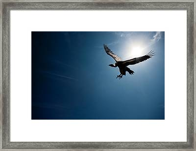 Vulture Flying In Front Of The Sun Framed Print by Johan Swanepoel