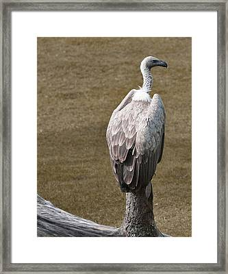 Vulture On Guard Framed Print
