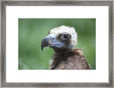 Vulture Portrait Framed Print