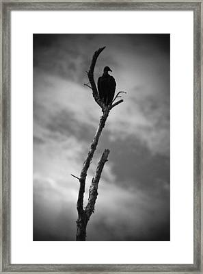 Vulture Silhouette Framed Print by Bradley R Youngberg