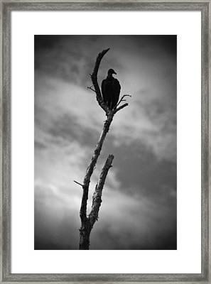 Vulture Silhouette Framed Print