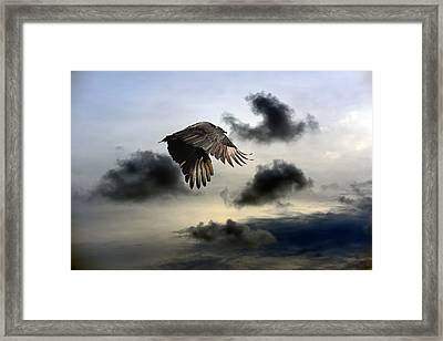 Vulture Sky Framed Print