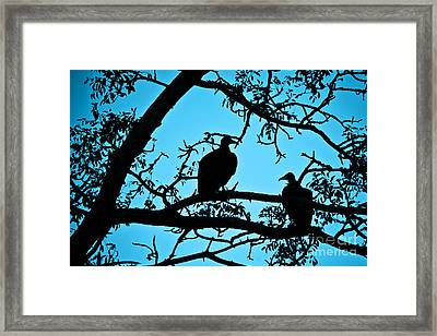 Vultures Framed Print