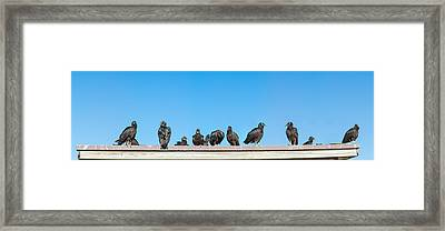 Vultures On Anhinga Trail, Everglades Framed Print