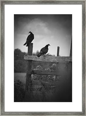 Vultures On Fence Framed Print by Bradley R Youngberg