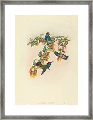 W. Hart British, Active 1851 - 1898, Agyrtria Bartletti Framed Print by Quint Lox