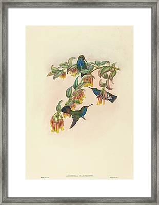 W. Hart British, Active 1851 - 1898, Agyrtria Bartletti Framed Print