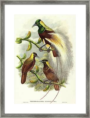 W. Hart, British Active 1851-1898, Trichoparadisea Gulielmi Framed Print by Litz Collection