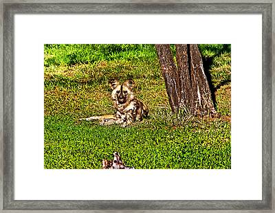 Waching You Framed Print