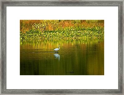 Wading Egret Framed Print
