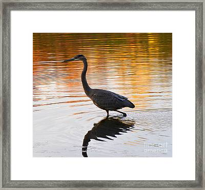Wading For You Framed Print