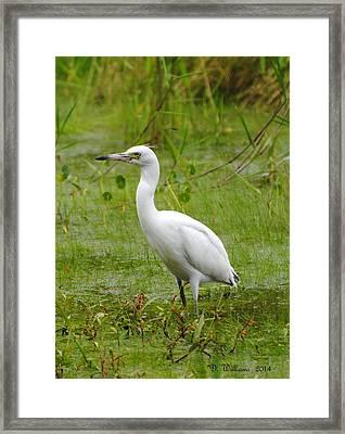 Wading Heron Framed Print
