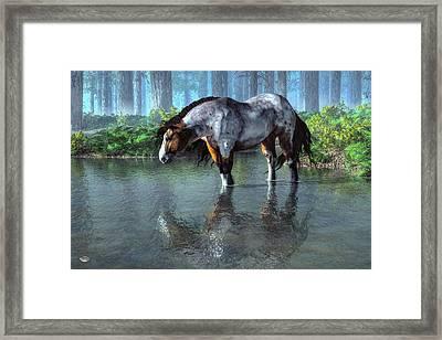 Wading Horse Framed Print