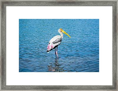 Wading Stork Framed Print