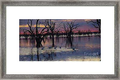 Wading The Shallows Framed Print