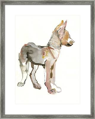Waggle Arabian Wolf Pup Framed Print
