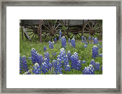 Wagon With Bluebonnets Framed Print