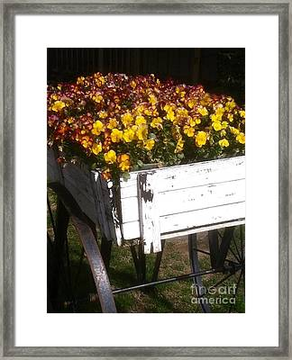 Wagonful Of Happy Pansies Framed Print