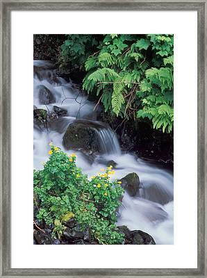 Wahkeena Creek Spring Framed Print