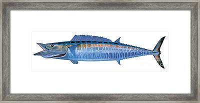 Wahoo Framed Print by Carey Chen