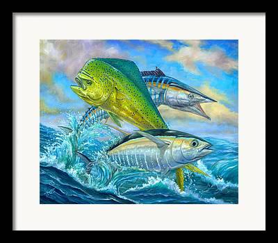 Yellowfin Framed Prints