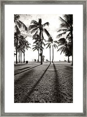Waikiki Palm Shadows Framed Print by Sean Davey