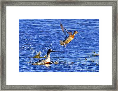Wait For Me Framed Print by Gary Holmes