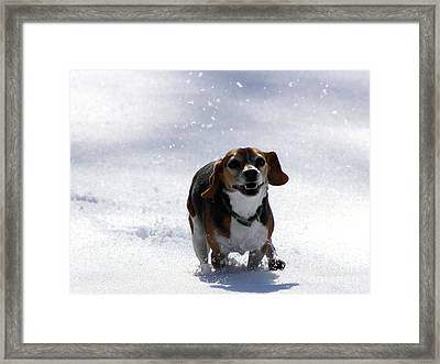 Wait For Me Papa Framed Print by Fred  Sheridan