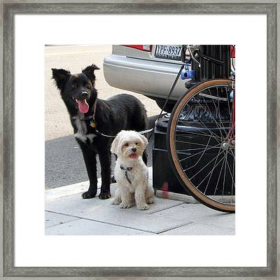 Wait Here....... Framed Print by  Andrea Lazar