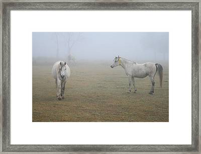 Wait There Framed Print by Paulette Maffucci