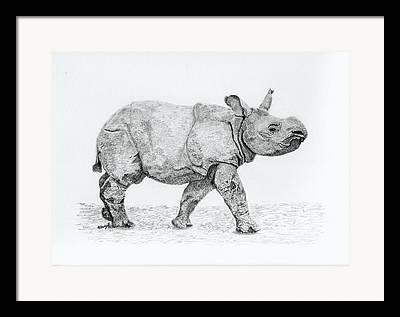 One Horned Rhino Drawings Framed Prints