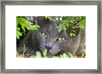 Waiting And Watching Framed Print