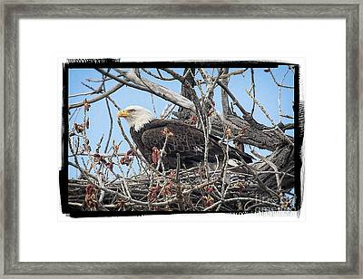 Waiting Framed Print by Bob Hislop