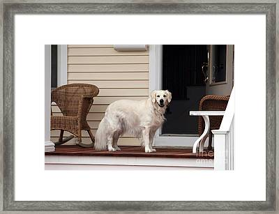 Waiting By The Door For You Framed Print by John Rizzuto