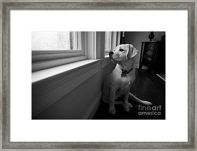 Waiting Framed Print by Diane Diederich