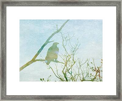 Waiting Eagle Framed Print by Georgia Fowler