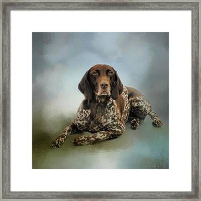 Waiting For A Cue - German Shorthaired Pointer Framed Print