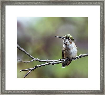 Waiting For A Fight Framed Print