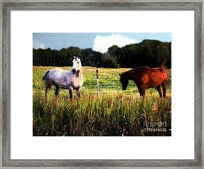 Waiting For Apples Framed Print