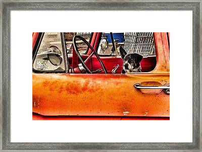 Waiting For Criminals Framed Print by Patricia Greer