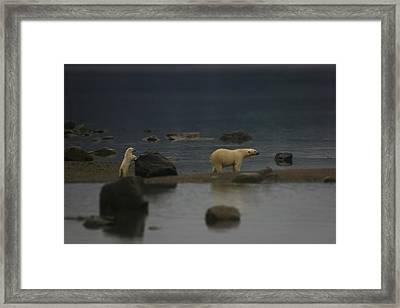 Waiting For Cub Number 2 Framed Print