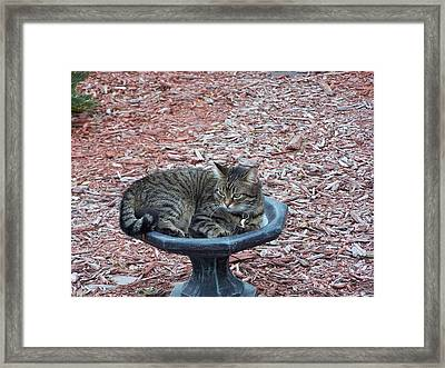 Framed Print featuring the photograph Waiting For Dinner by Michele Kaiser