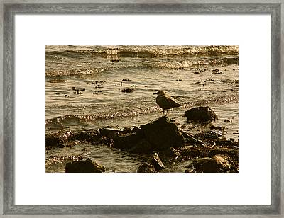 Waiting For Dinner Framed Print