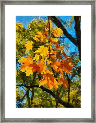 Waiting For Fall Framed Print