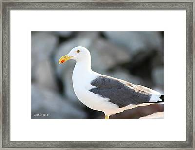 Framed Print featuring the photograph Waiting For Lunch by Dick Botkin