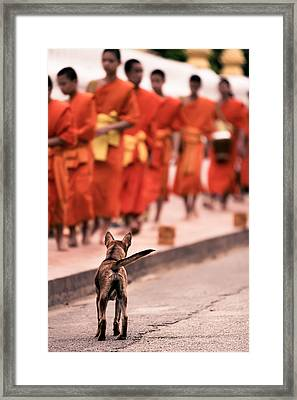 Waiting For Master Framed Print by Justin Albrecht