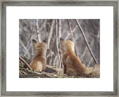Waiting For Mom 2011 Framed Print by Thomas Young